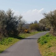 Exmouth to Budleigh Cycle Way Main Section